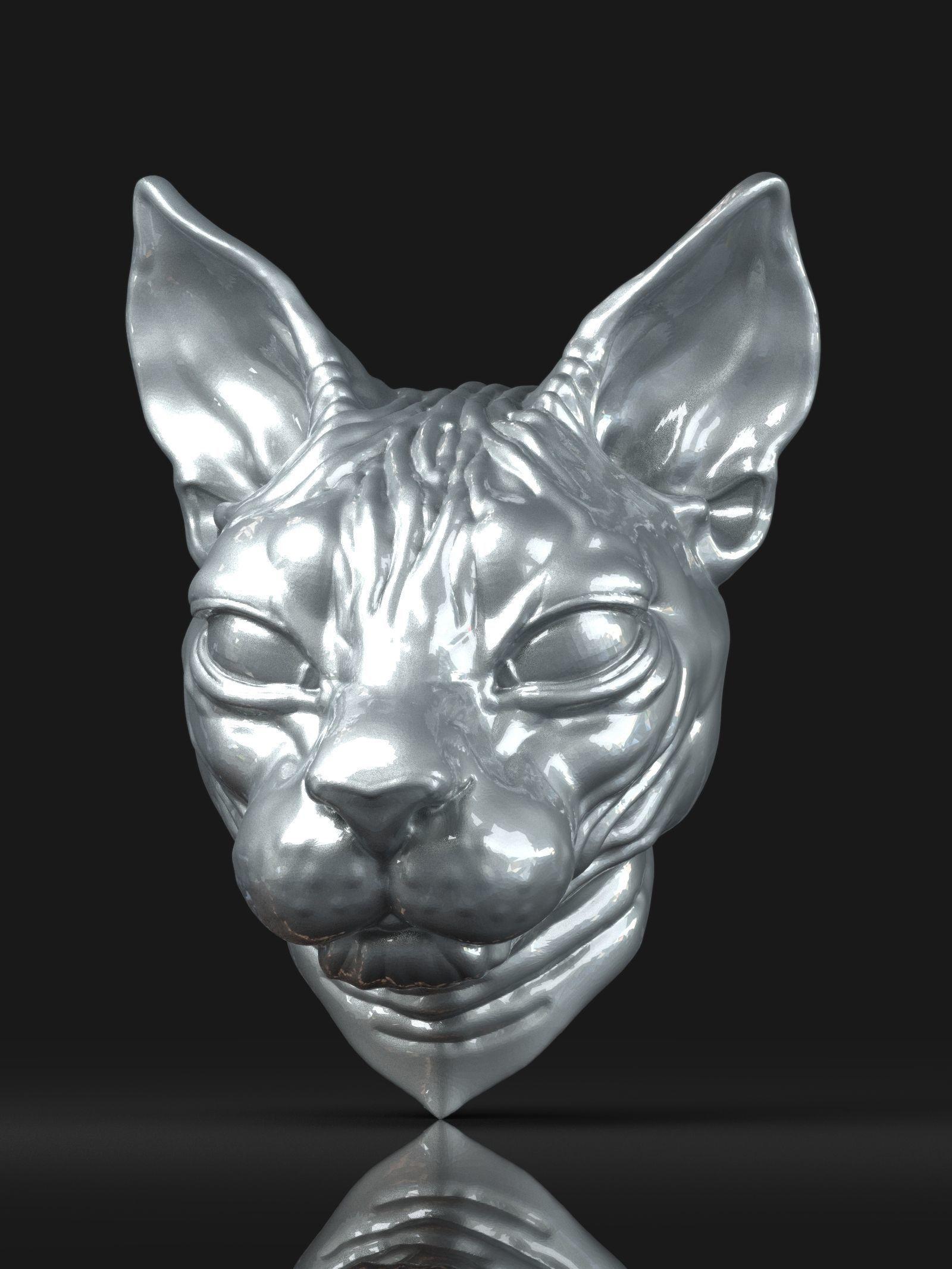 Cat sphynx Head