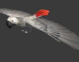 3D asset Gray parrot
