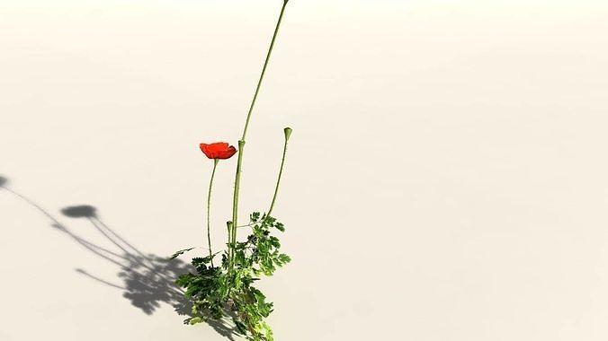 everyplant-field-poppy-08-14-models-3d-m