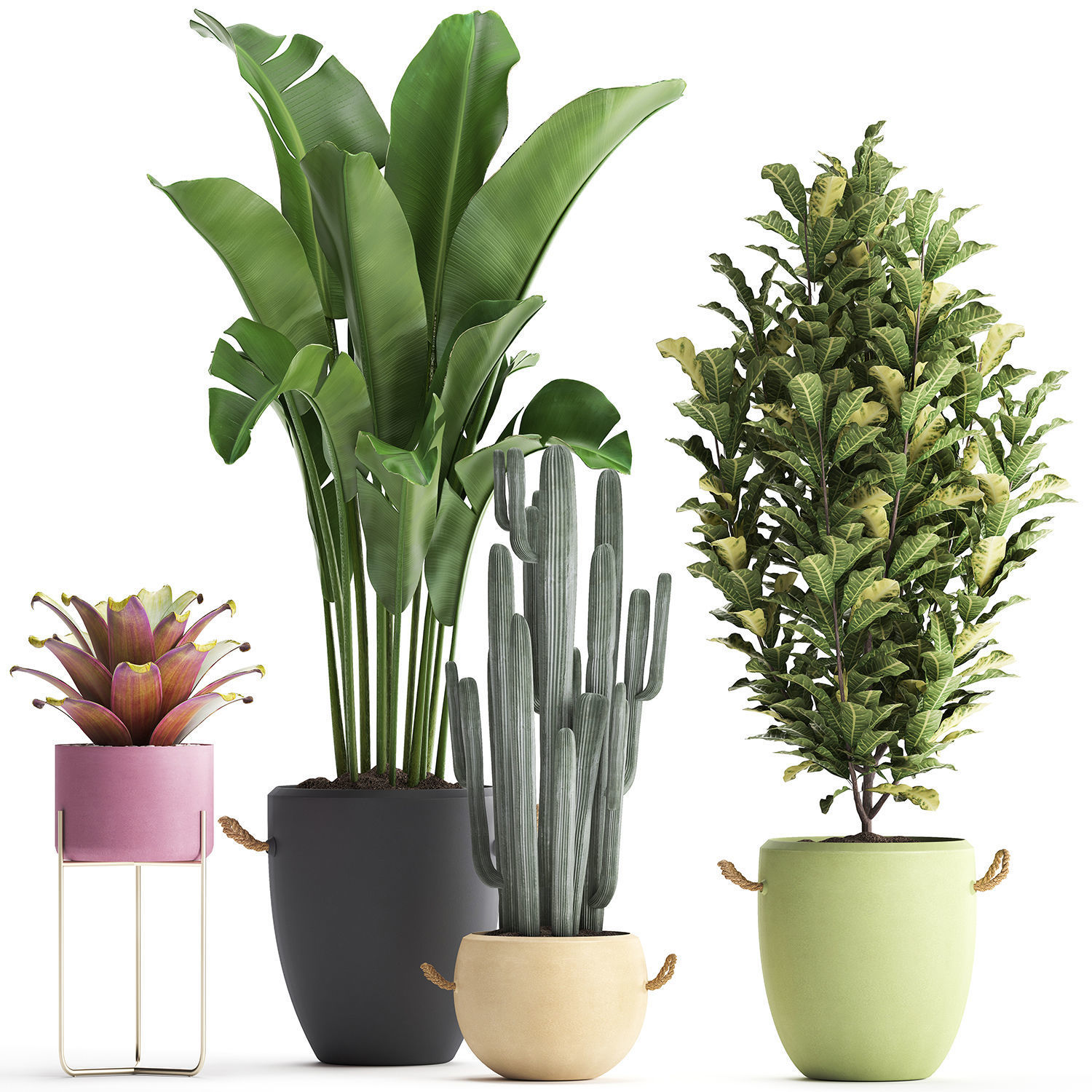 Collection of Exotic Plants 440