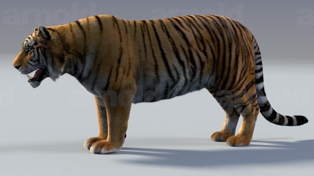 Tiger maya