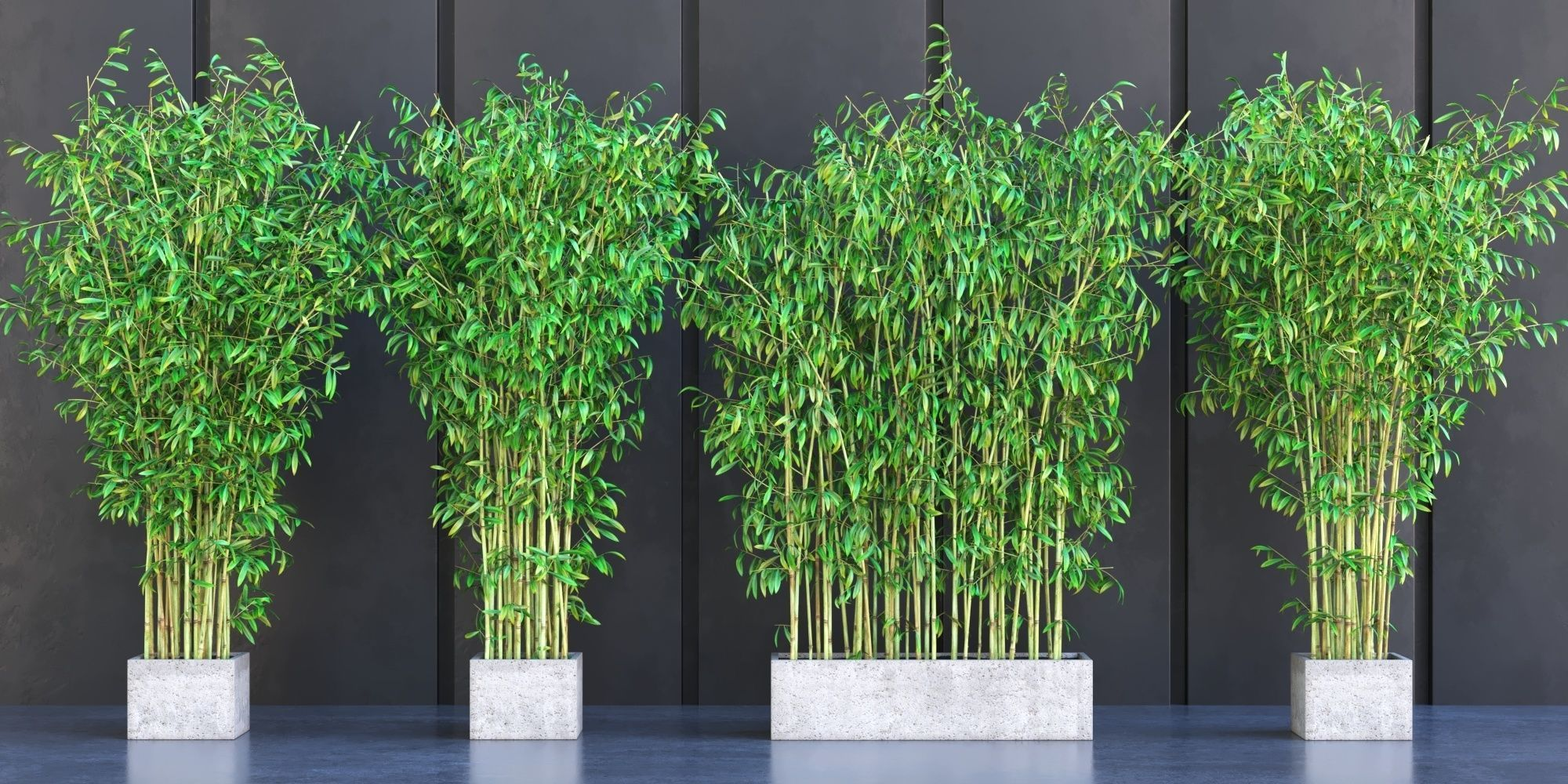 3d Model Bamboo Plants In Pots Cgtrader