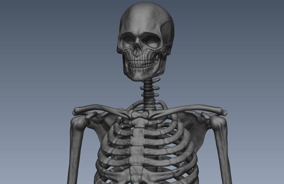 Skeleton hige poly model