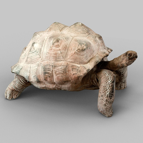 turtle 3d model obj mtl 1
