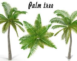 3D model Coconut palm