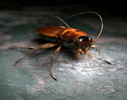 3d cockroach