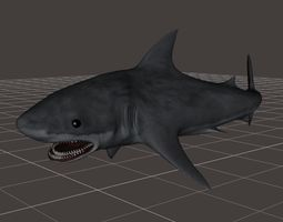 3D Great White Shark rigged 1