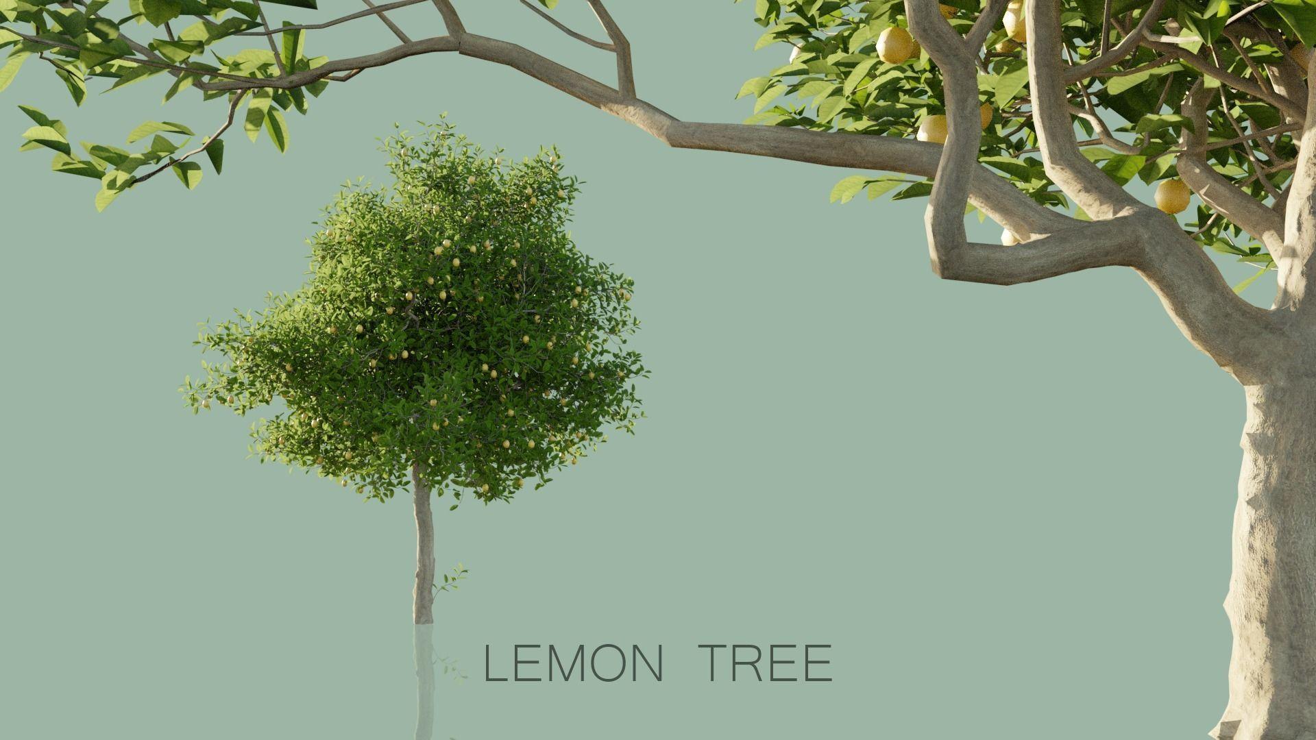 Lemon Trees Pack