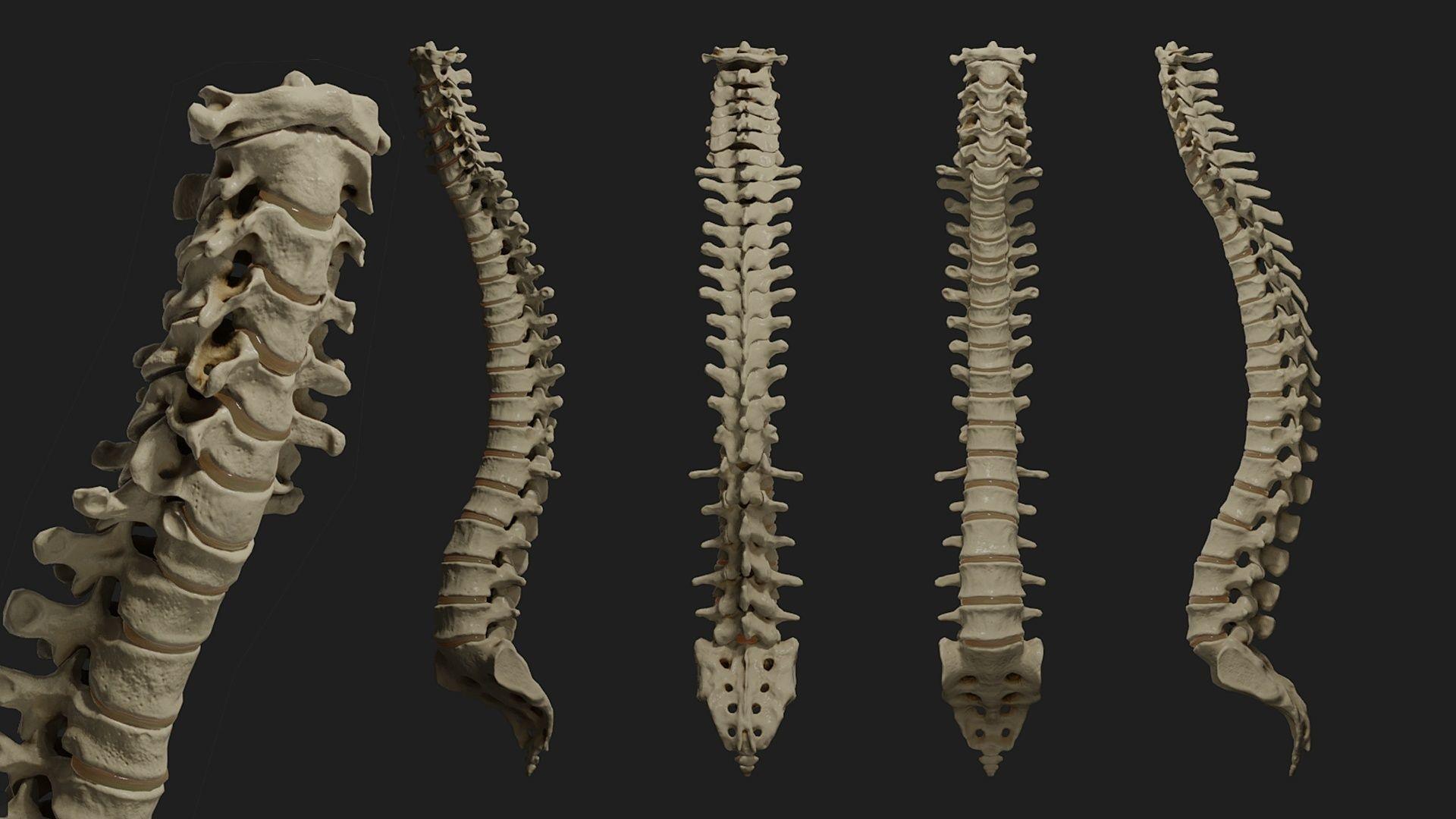 Human spine PBR