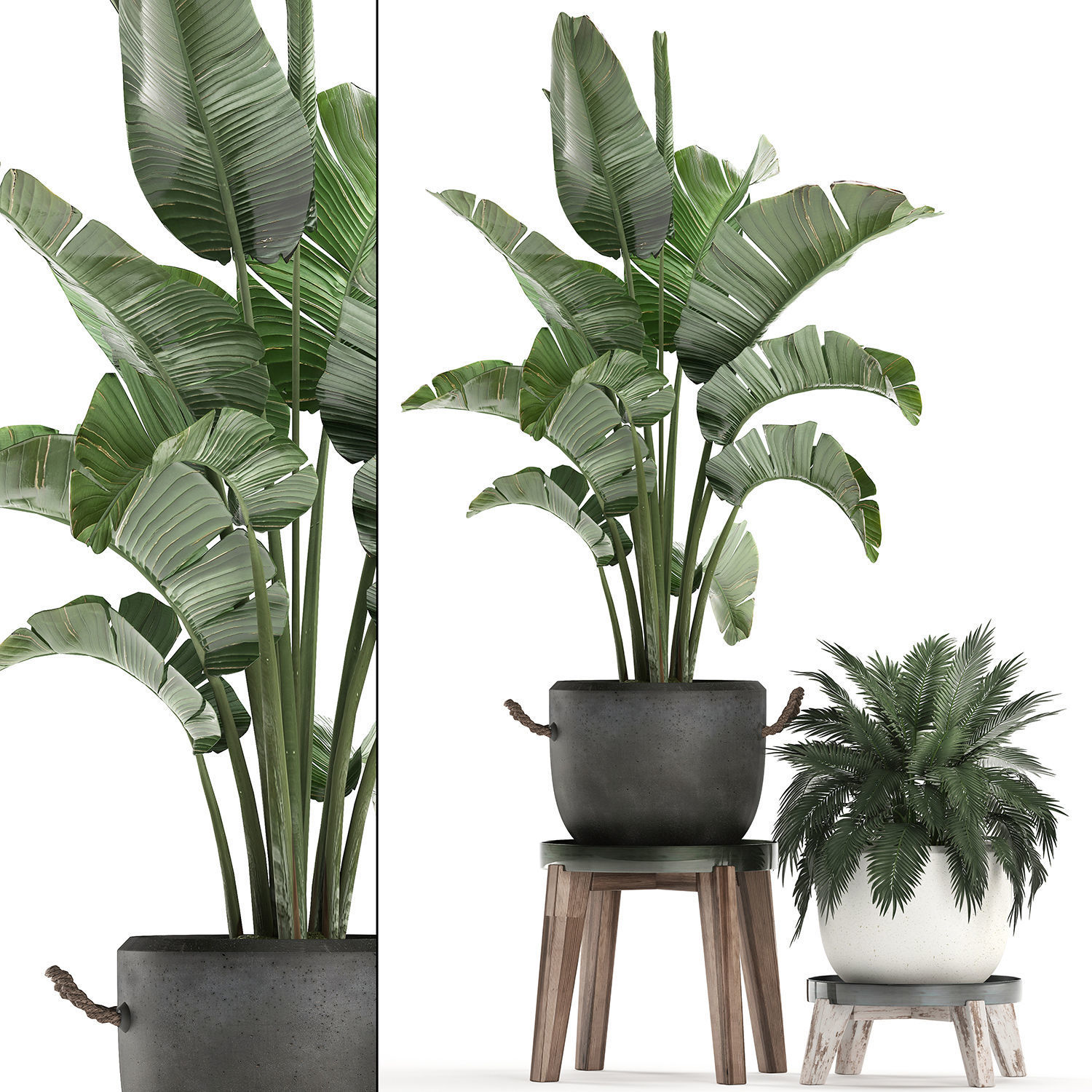 3d Model Decorative Plants In Flower Pots For The Interior
