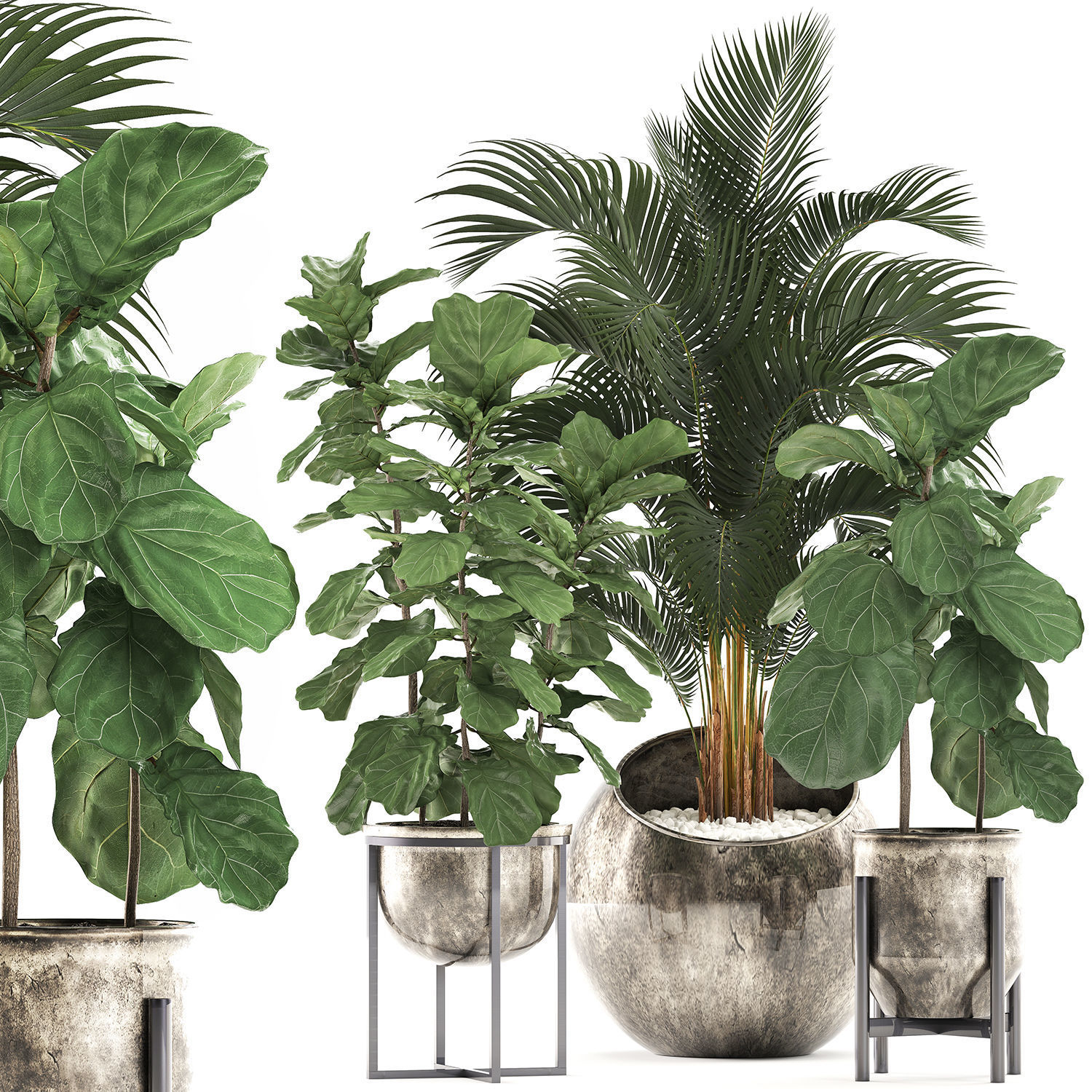 Decorative plants in flower pots for the interior 474