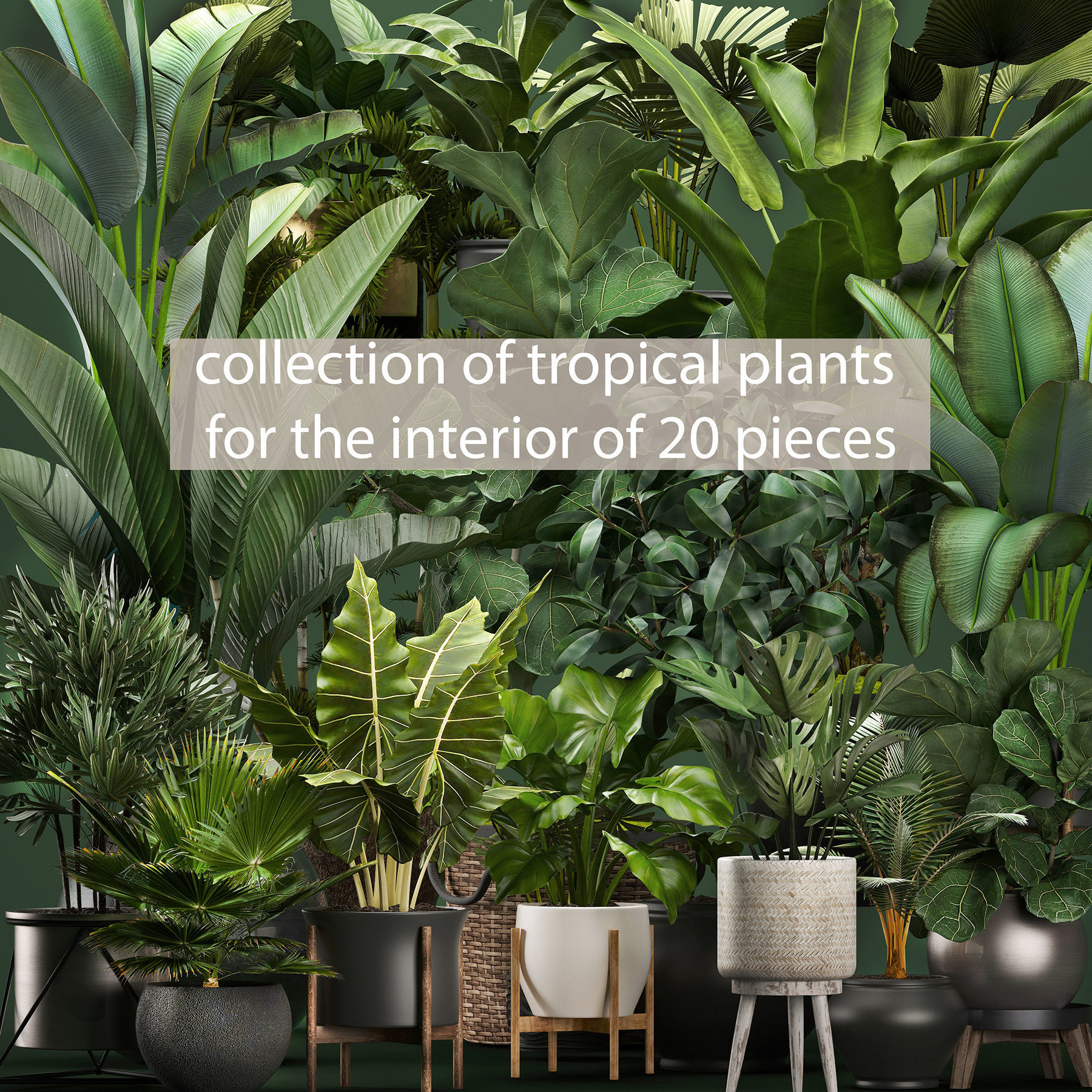 Collection of potted plants for the interior of 20 pieces NEW