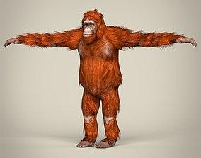 Low Poly Realistic Orangutan 3D asset