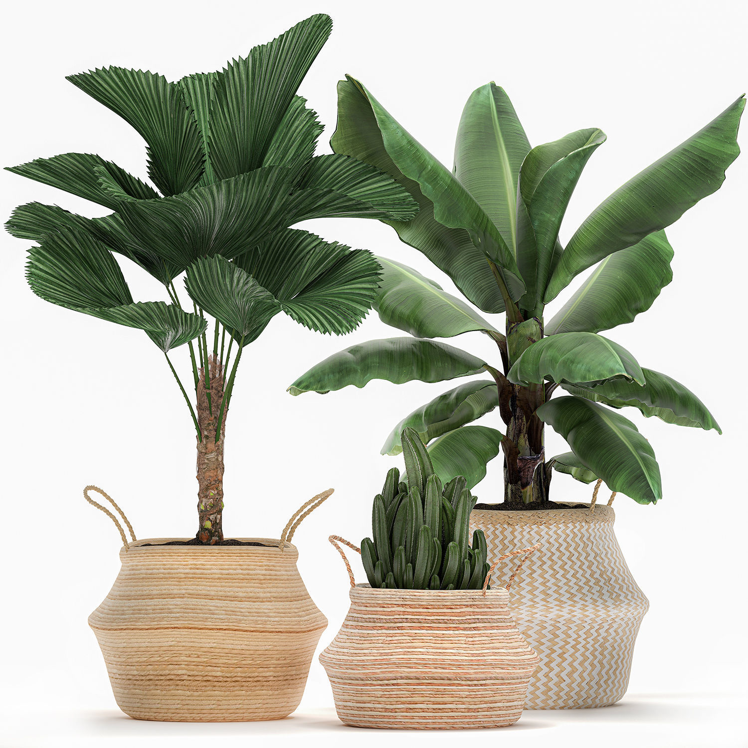 Decorative plants in flower pots for the interior 486