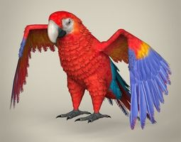 Low Poly Realistic Parrot 3D asset