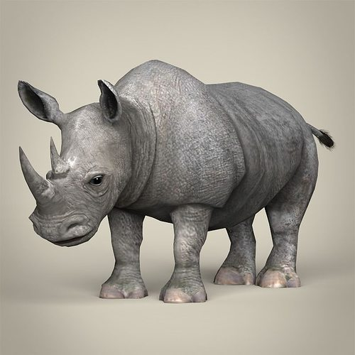 low poly realistic rhinoceros 3d model low-poly max obj 3ds fbx c4d lwo lw lws 1