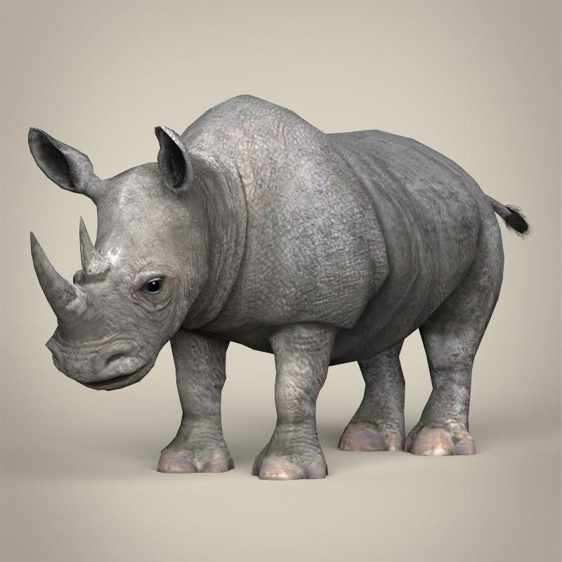 3D Model Low Poly Realistic Rhinoceros VR / AR / Low-poly