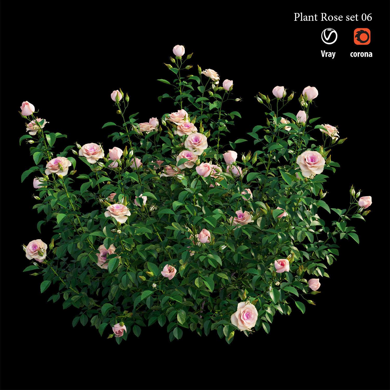 Plant rose set 07