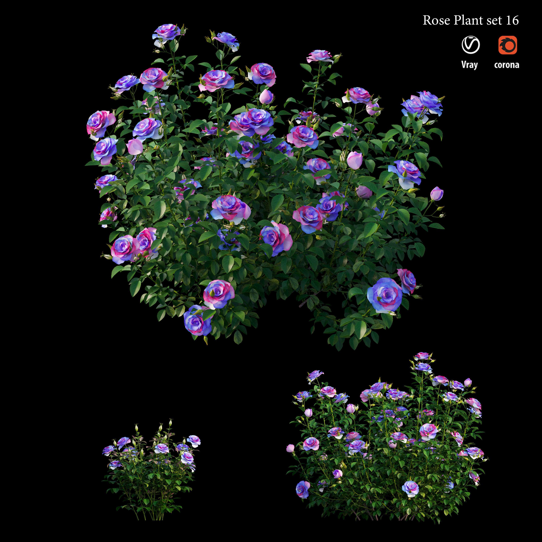 Plant rose set 16