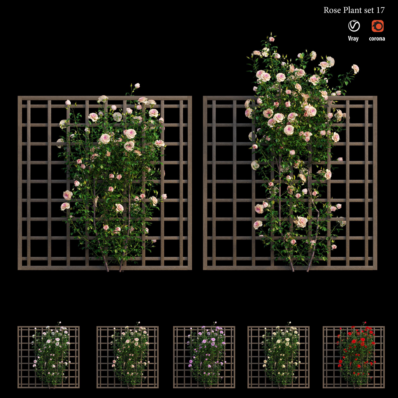Plant rose set 17