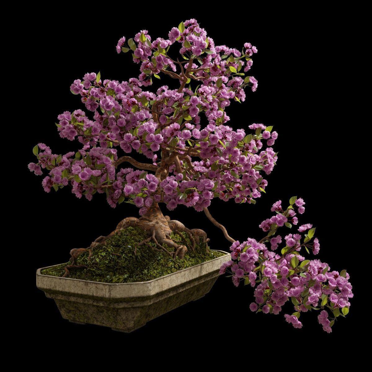 3d Model Bonsai Sakura In A Concrete Bowl Cgtrader