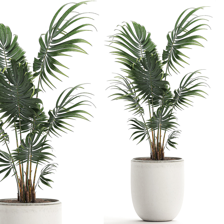 Decorative palm in a white flowerpot 519