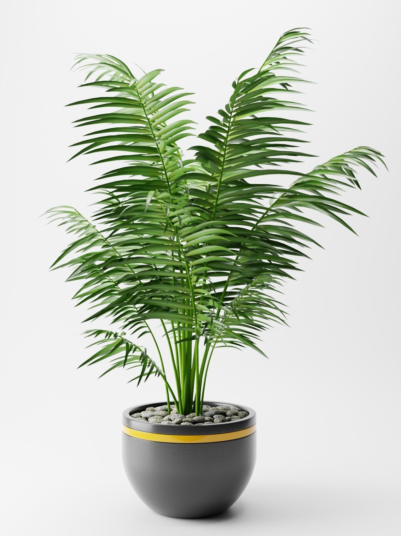 3D model Areca palm Plant indoor | CGTrader