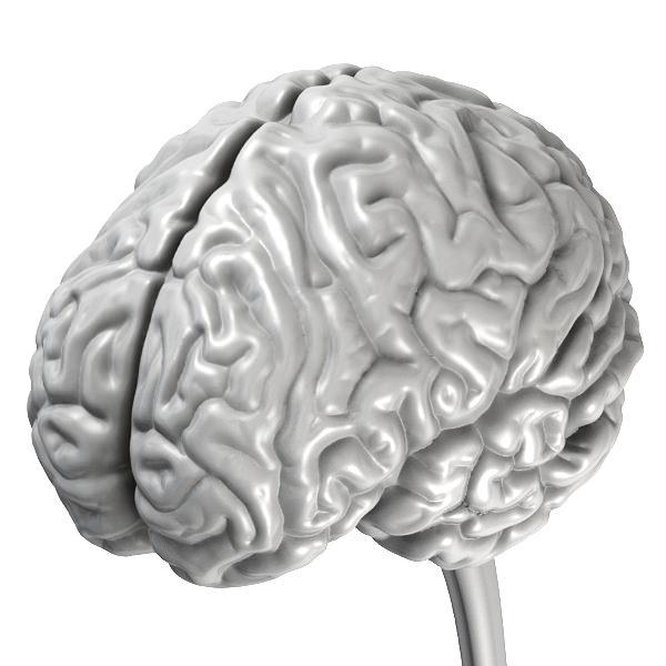 Accurate Human Brain 3D Model OBJ BLEND MTL