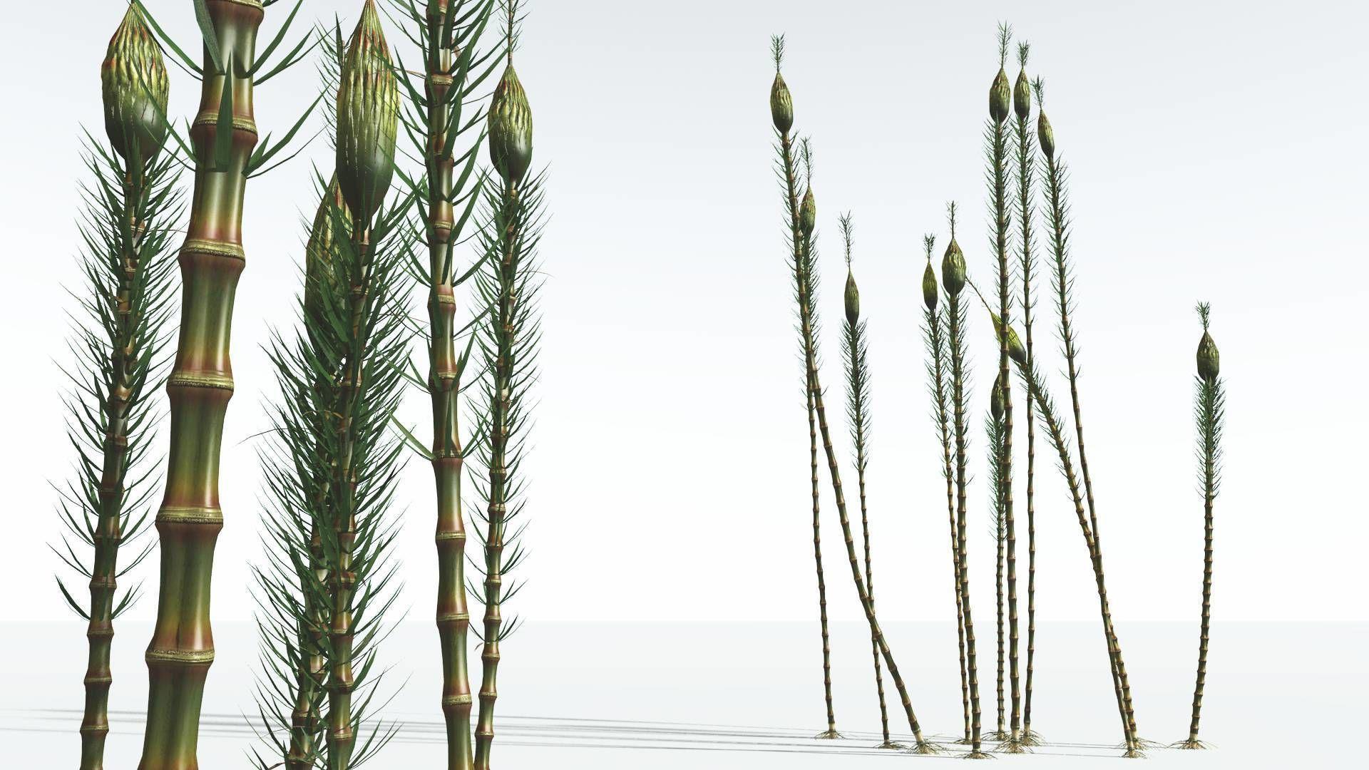 EVERYPlant Suckows Horsetail Tree 02 --16 Models--