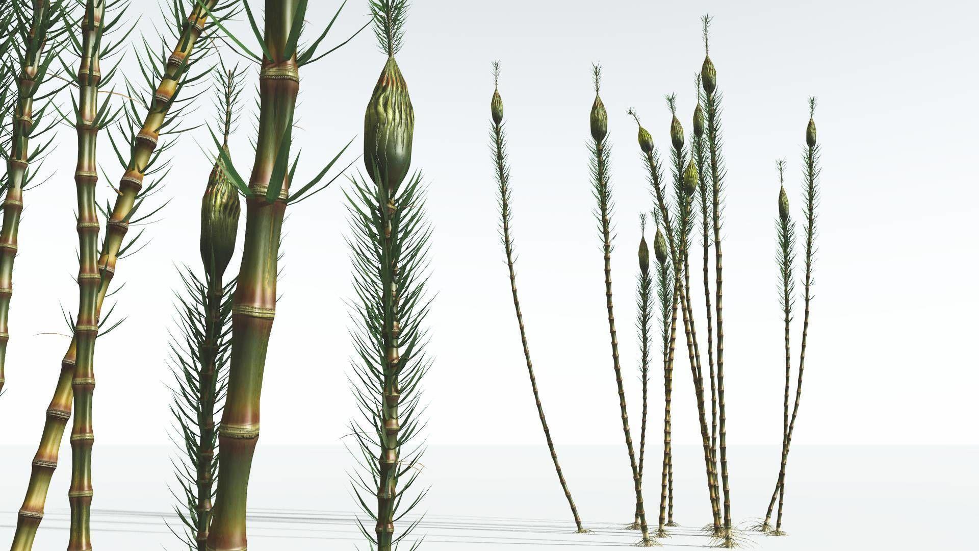 EVERYPlant Suckows Horsetail Tree 05 --16 Models--
