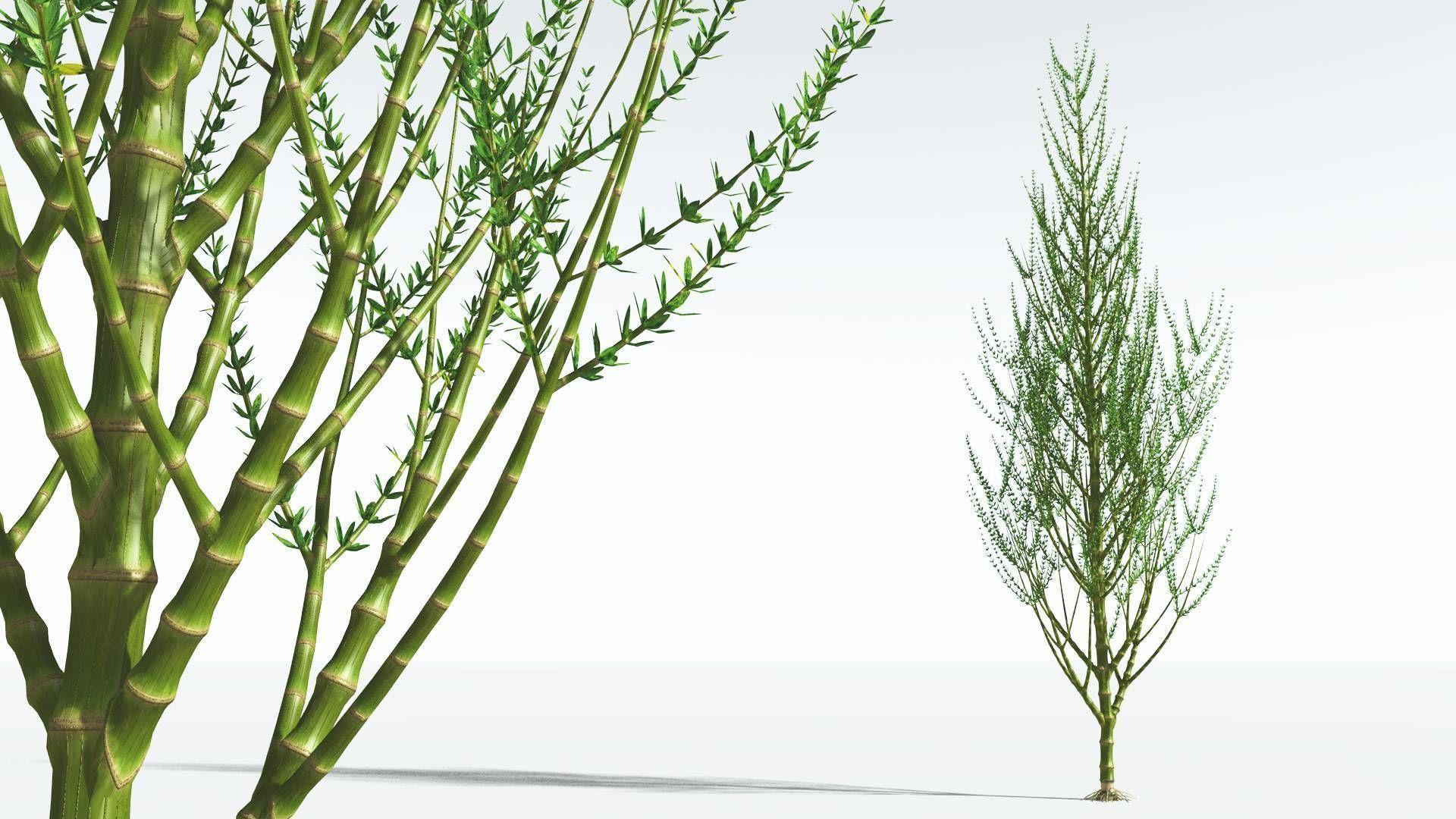 EVERYPlant Ridged Horsetail Tree 09 --12 Models--