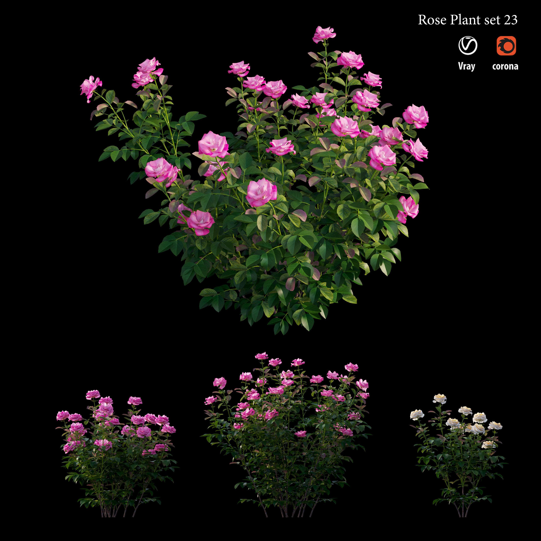 Rose plant set 23