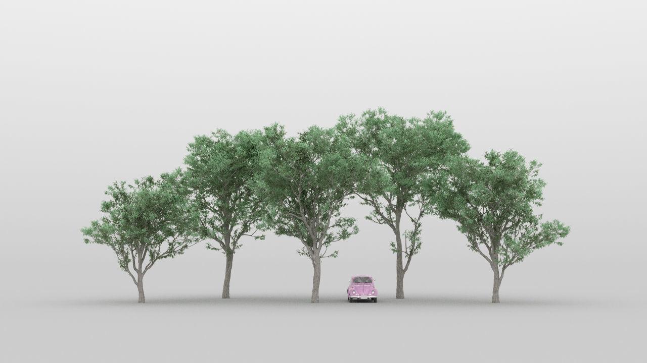 Acacia Tree Pack 01