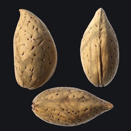 Almond Shell C