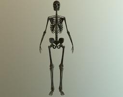 low-poly 3d model bones