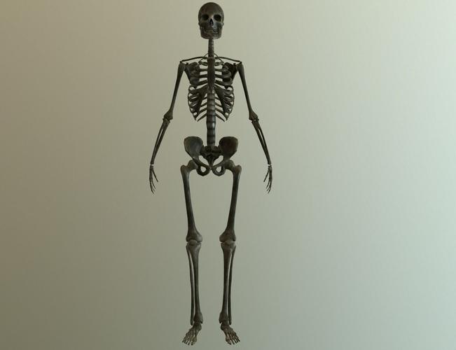 bones 3d model low-poly fbx tga 1