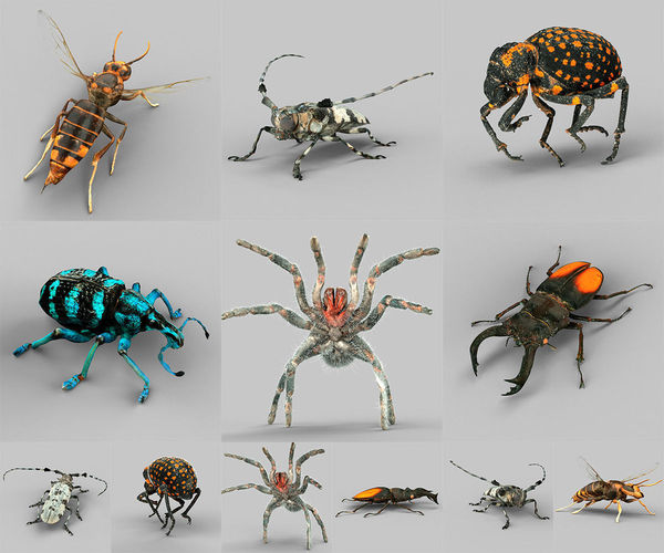 insect collection vol 1 3d model obj 1