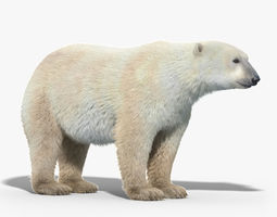 polar bear fur 3d model max obj fbx