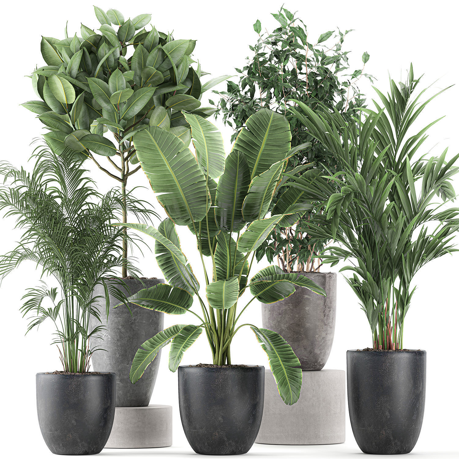 Decorative plants for the interior in flowerpots 610