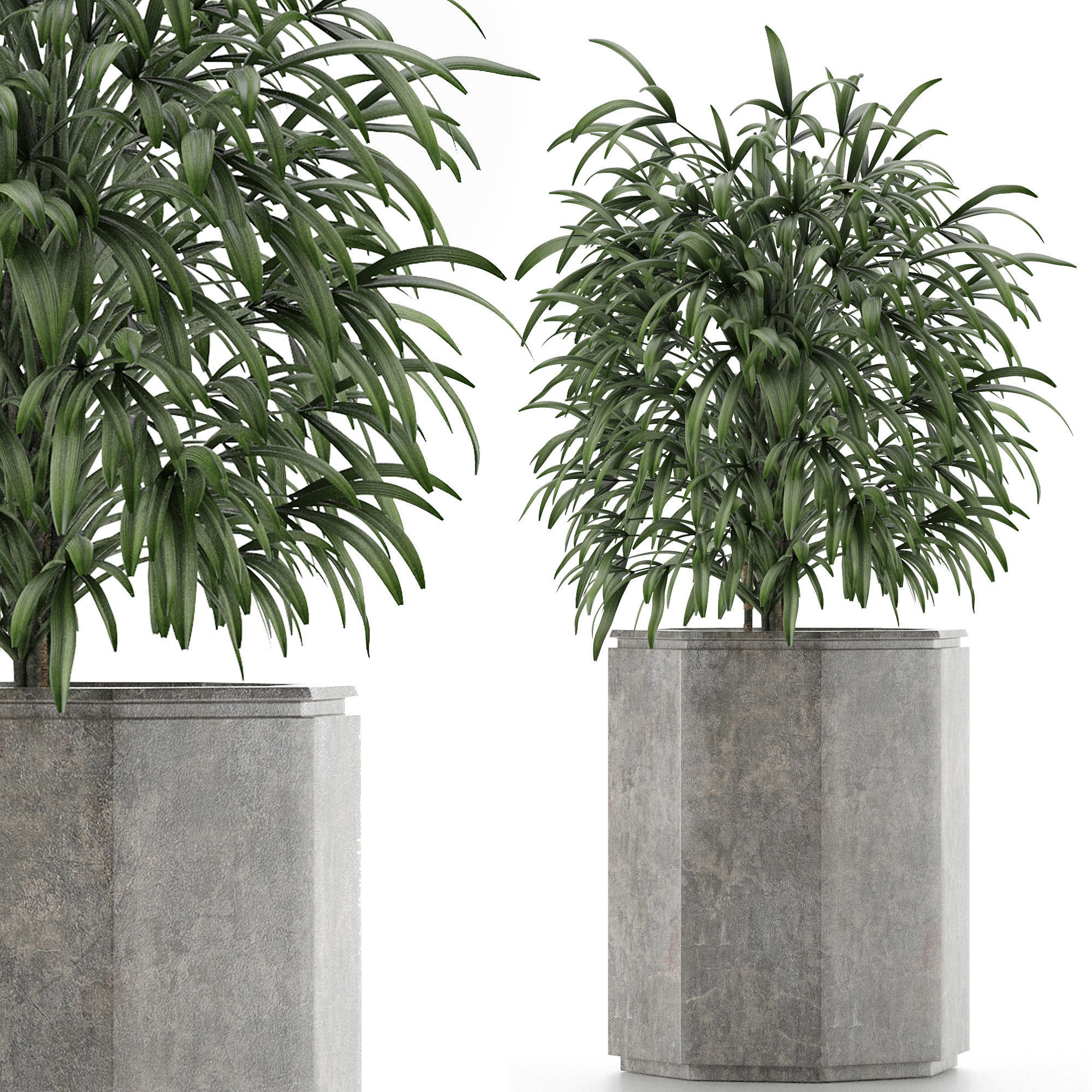 Single Plant 04