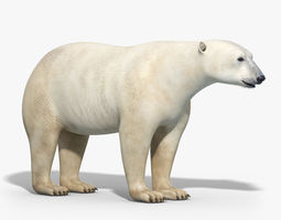 polar bear 3d model max obj fbx