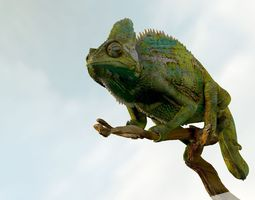 3D Chameleon Realistic High Poly