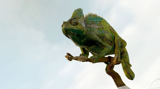 chameleon realistic high poly 3d model obj ztl 1