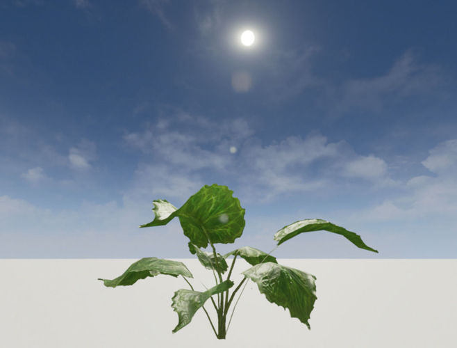 tropical big leafed plant - low polly 3d model low-poly obj fbx blend 1