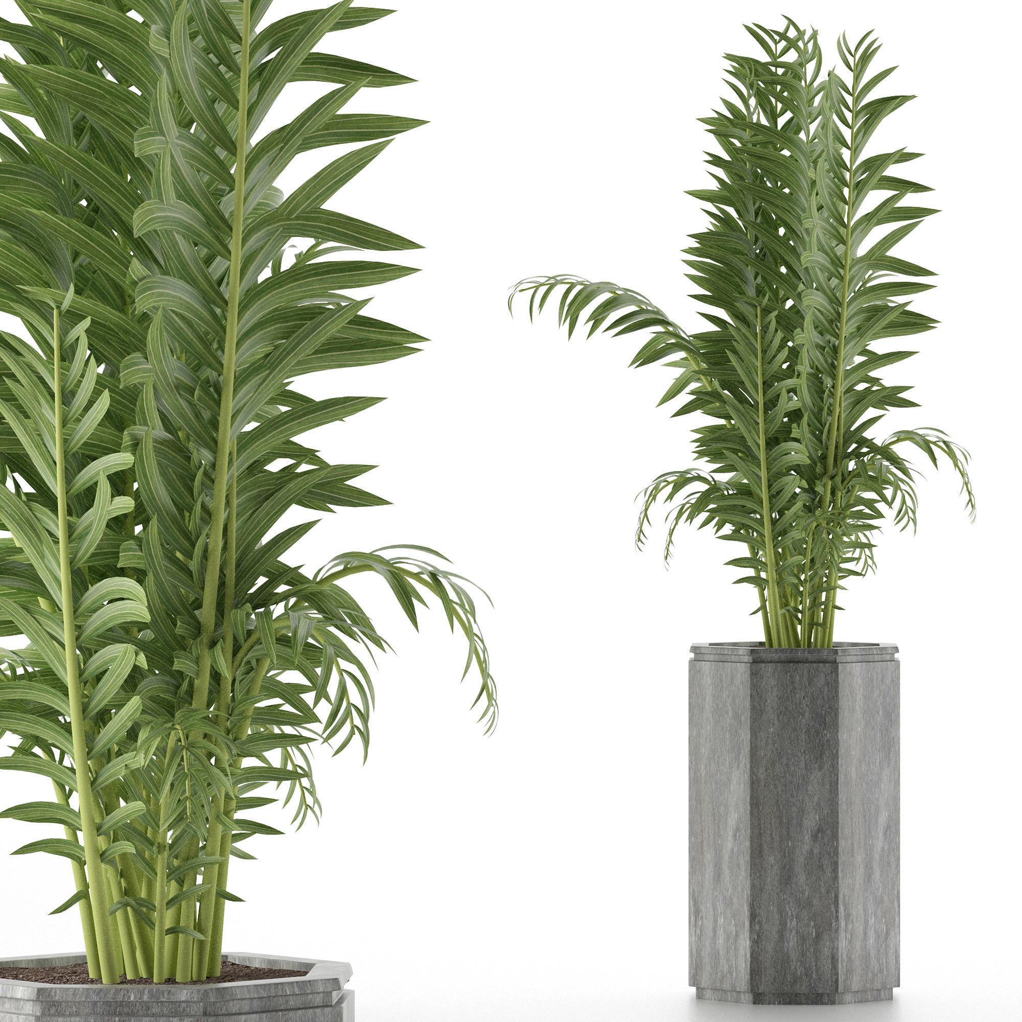 House Plant 40