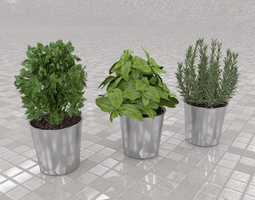 culinary herbs 3d model