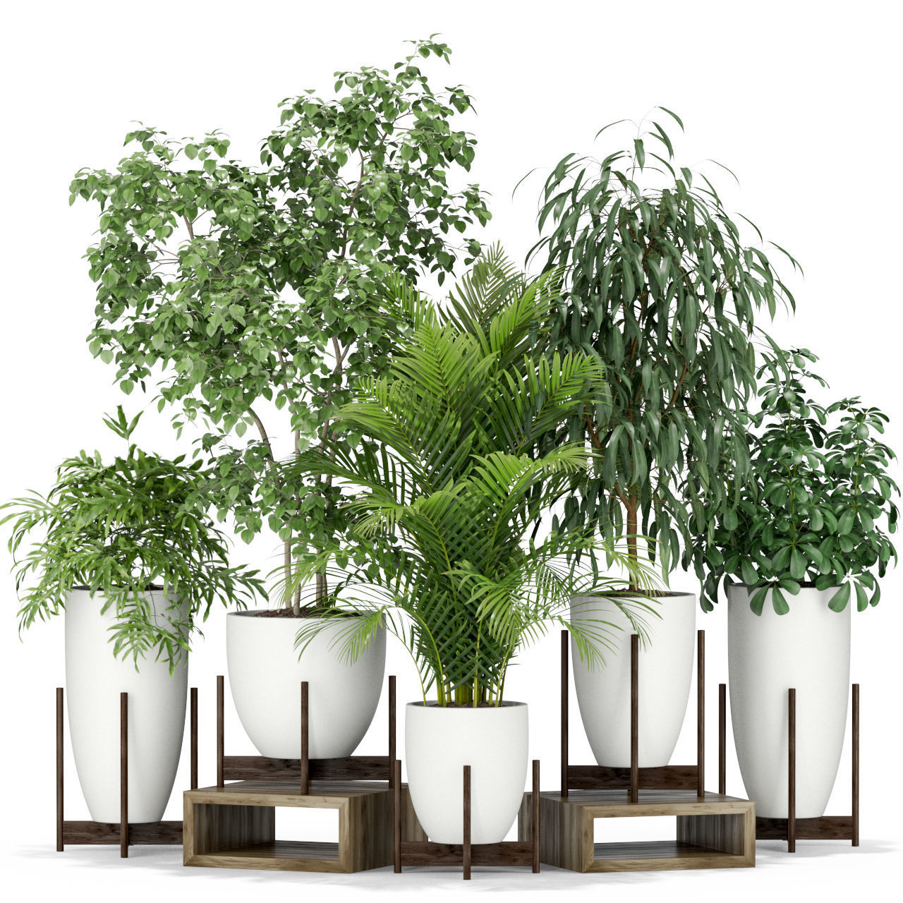 Plants collection 350