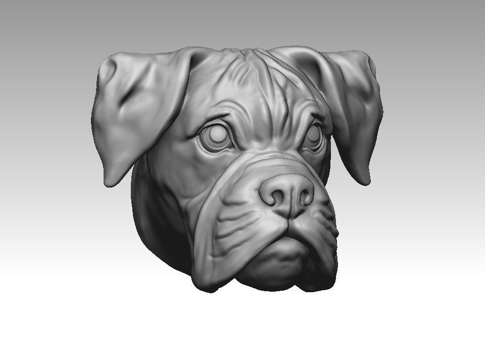 Boxer dog head 3D print model