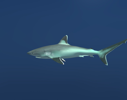 3d asset silvertip reef shark low-poly animated