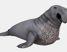 3D asset Elephant seal low poly